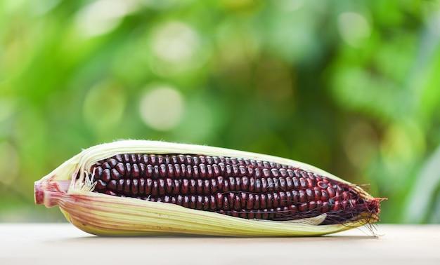 Purple corn fresh on cob on wood