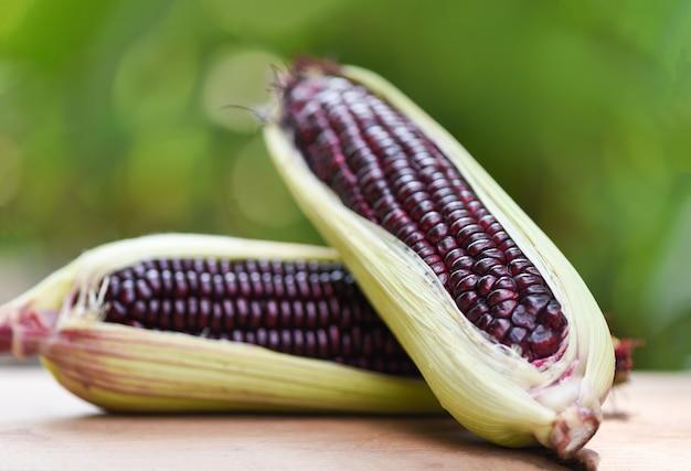 Purple corn fresh on cob on wooden