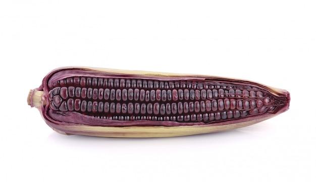 Purple corn isolated on white