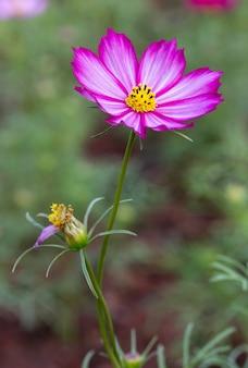 紫色の宇宙の花
