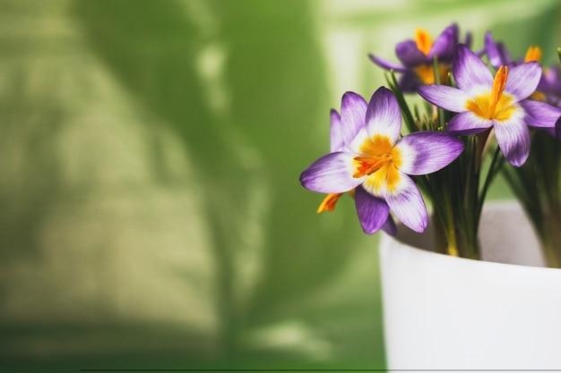 緑の背景をぼかした写真の鍋に紫のクロッカスの花