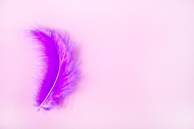 Purple feather on light pink background. copy space.
