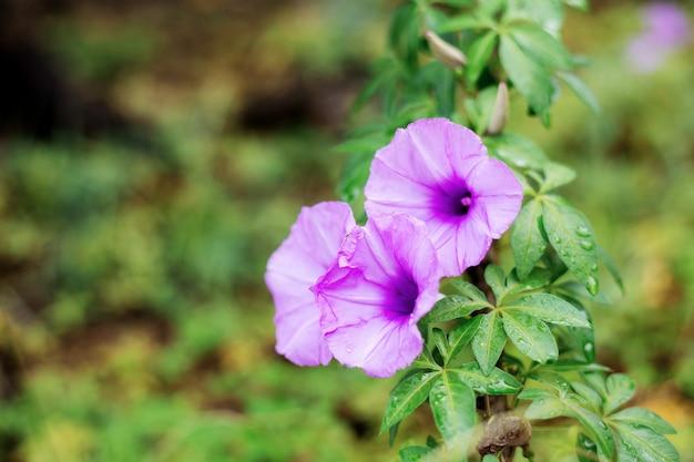 Purple flower in forest.