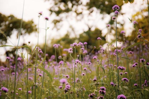 空と冬のフィールドに紫色の花。