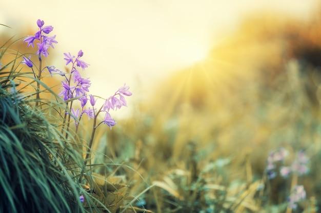 낮 동안 푸른 잔디에 보라색 꽃