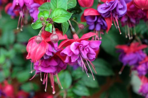 오스트리아에서 여름에 꽃이 만발한 녹색 식물에 보라색 꽃