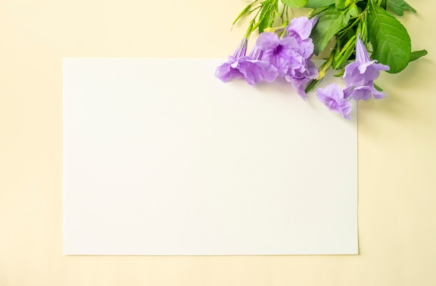 Purple flower on white and soft yellow background