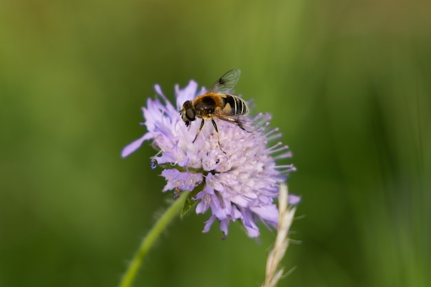 Purple flower with bee in the forest on a sunny day