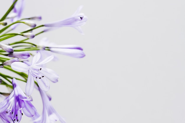 Purple flower with copy space