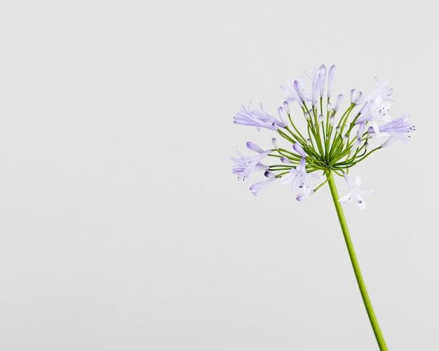 A purple flower with copyspace