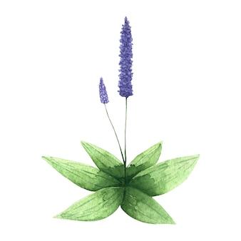 Purple flower with green leaves violet flower clip art watercolor flower illustration