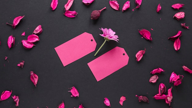 Purple flower with small papers on table