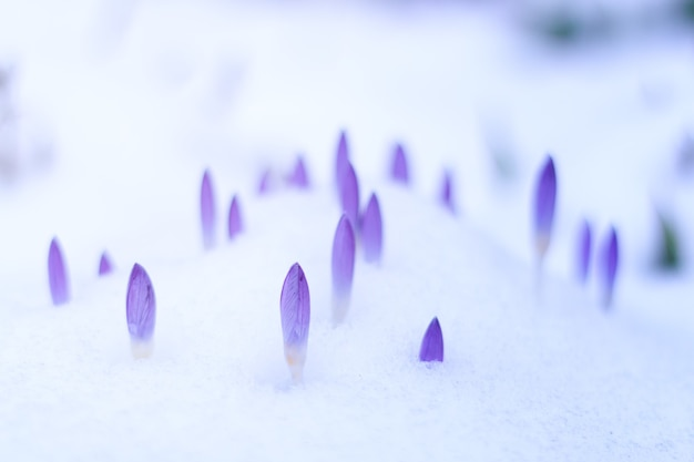 紫の花と雪