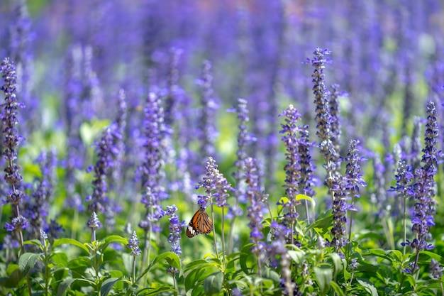 Фиолетовые цветы цветут в парке.