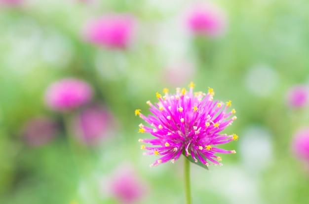 Purple flowers, bokeh green pattern background