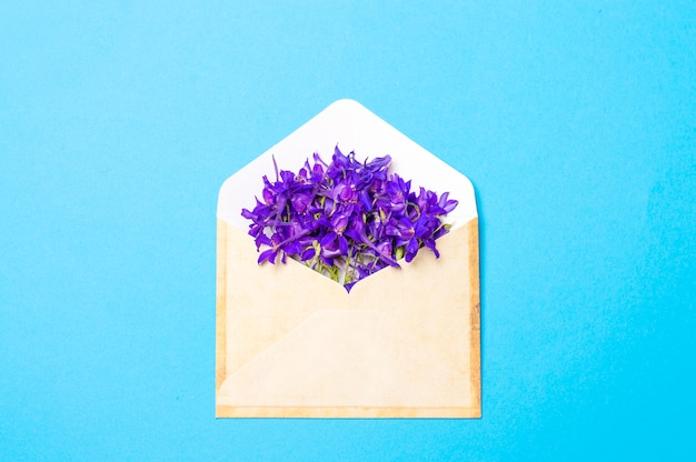 Purple flowers in an envelope on a blue background