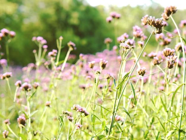 紫の花の庭と自然なヴィンテージ調の植物の美しい花の緑の草