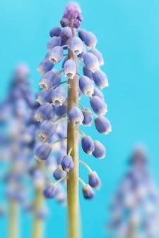 Фиолетовые цветы, растущие в весенний сезон