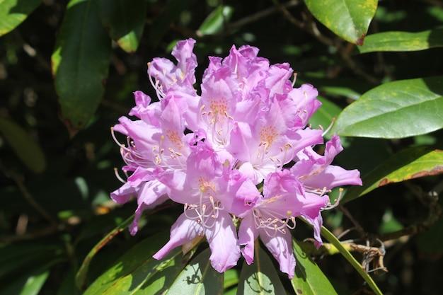 ジョージア州の紫色の花の頭のマクロとクローズアップ。自然とぼやけた表面。ボケ。