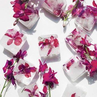 Purple flowers in ice cubes on white background