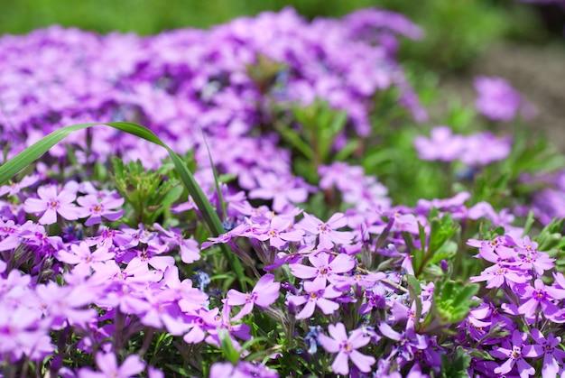 庭の紫色の花