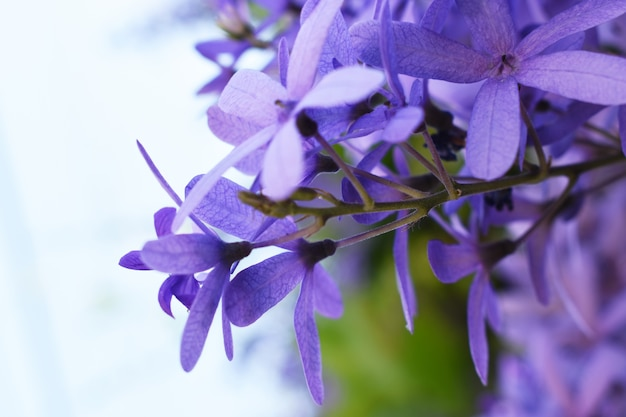 purple flowere