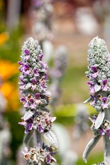 Фиолетовые цветы летом