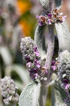 Фиолетовые цветы летом Premium Фотографии