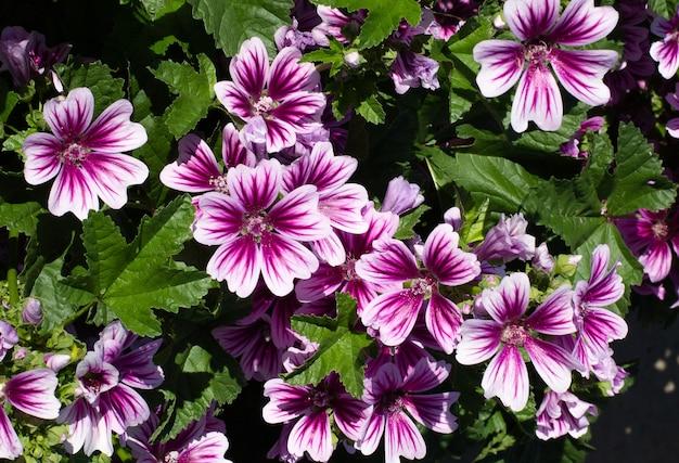 Фиолетовые цветы в дикой природе