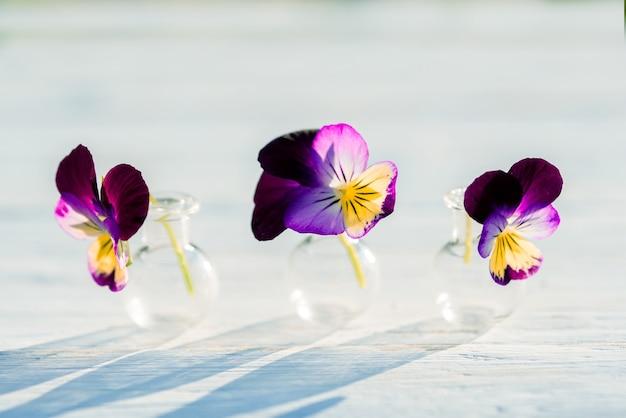 パンジーの紫色の花、村の夏の夜、暖かい晴れた夕日、屋外の影。ガラスフラスコ内のバタニカの美しい植物。