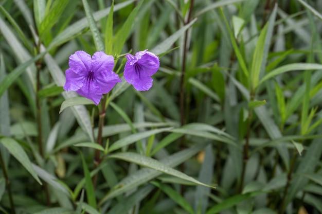 濃い緑色の背景に紫色の花