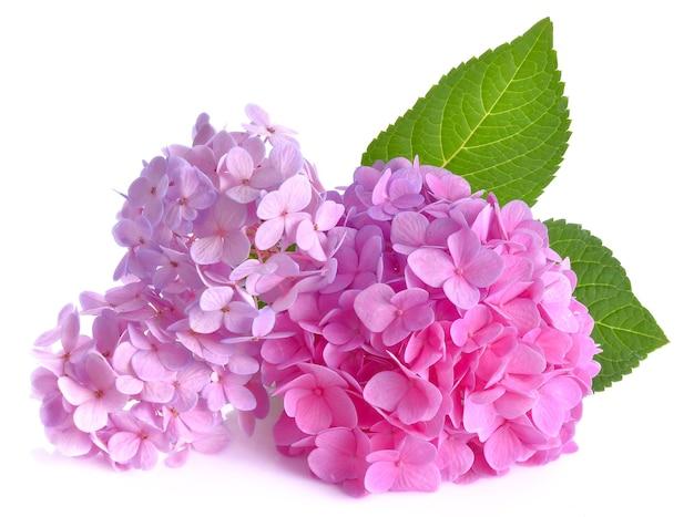 白い表面に紫色の花