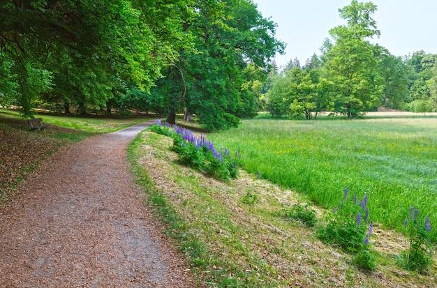 Фиолетовые цветы на краю дорожки в летнем парке