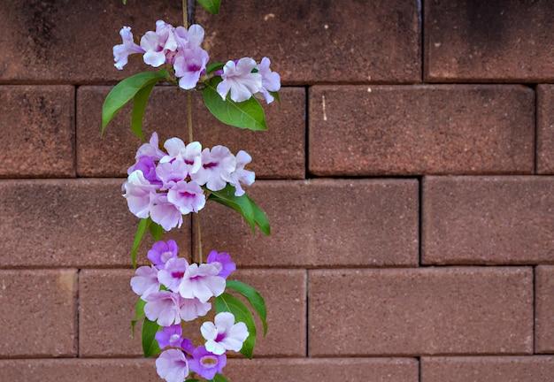 벽돌 벽에 보라색 꽃