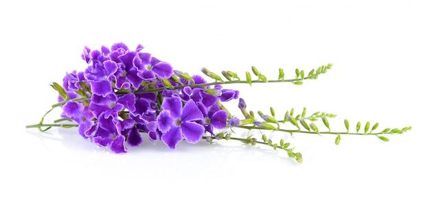 白い背景の上の紫色の花
