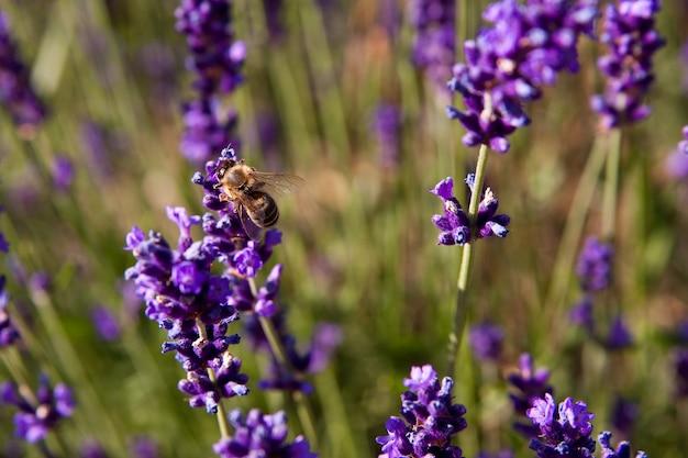 Фиолетовые цветы в окружении травы днем