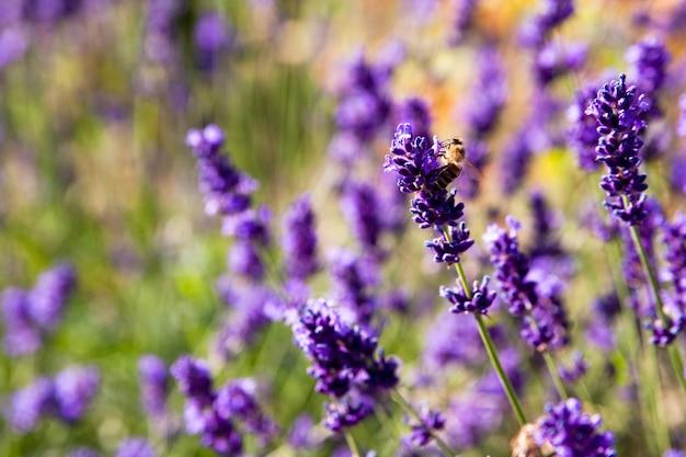 昼間は草に囲まれた紫色の花