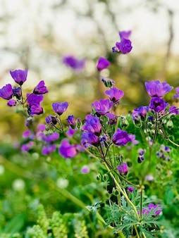 Purple flowers in tilt shift lens, selective focus background blur