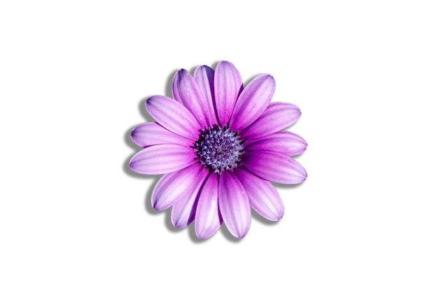 Purple flowers in a white patterned background