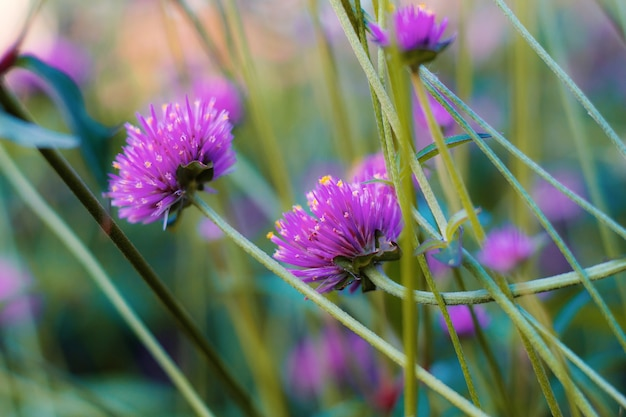 보라색 꽃.