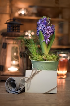 Purple hyacinth and greeting card on winter kitchen