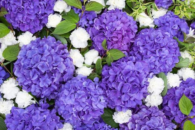 紫のアジサイの花。上面図。自然