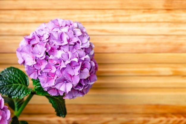 木製の柵の背景に紫のアジサイ。アジサイ、紫のオルテンシアの花の茂みのコピースペース。バルコニーの家の花、庭のベランダのモダンなテラス。家の園芸、観葉植物。
