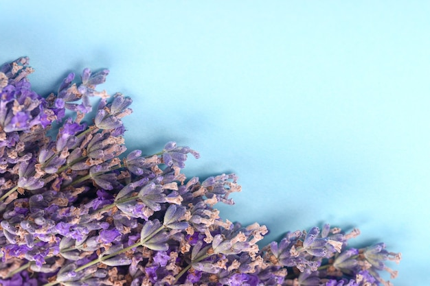 Purple lavender on a blue background with space for text