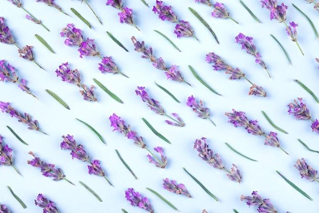 Purple lavender on a blue background.