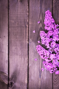 Purple lilac branch on brown wooden surface