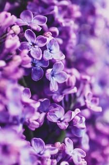 보라색 라일락 꽃 배경, 세로 프레임