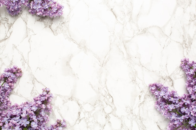 Purple lilac flowers background