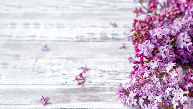 Purple lilac spring branches of blooming lilac festive bouquet of flowers. long web banner