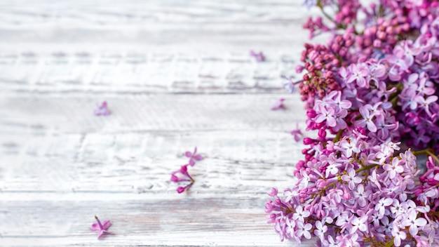보라색 라일락 꽃의 피 라일락 축제 꽃다발의 봄 분기입니다. 긴 웹 배너